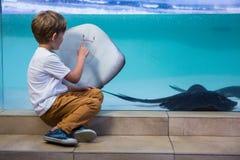 Young man pointing a manta ray Stock Image