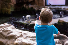 Young man pointing a penguins with his finger Royalty Free Stock Photography