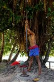 Young man pounding kava roots in Lavena village, Taveuni Island,. Fiji. The roots are used to produce a drink with sedative, anesthetic, euphoriant, and Royalty Free Stock Photography
