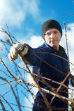 Young man  pruning apricot brunches Royalty Free Stock Images