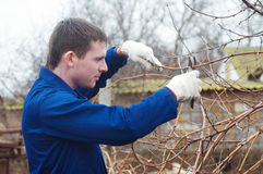 Young man pruning branch. Portrait of young man pruning branch with the pruner Stock Photography