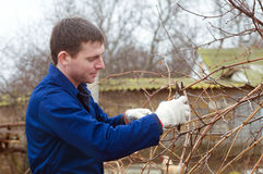 Young man pruning branch. With the pruner Stock Photo