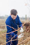 Young man pruning vine branch. In a vineyard with the pruner Stock Photo