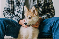 Young man with puppy. Young man with beautiful Siberian Husky puppy Stock Photos