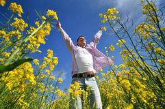Young man in rape field Stock Images
