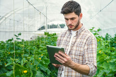 Young man recording measurements in a greenhouse. Young man working in a greenhouse recording measurements Stock Photo