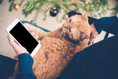 Young man relaxing at home with ginger cat and smartphone in his. Hand, cozy holiday evening, smartphone screen mock-up Stock Images