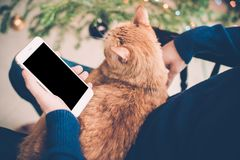 Young man relaxing at home with ginger cat and smartphone in his. Hand, cozy holiday evening, smartphone screen mock-up Stock Photos
