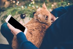 Young man relaxing at home with ginger cat and smartphone in his. Hand, cozy holiday evening, smartphone screen mock-up Royalty Free Stock Photography