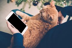 Young man relaxing at home with ginger cat and smartphone in his Royalty Free Stock Image
