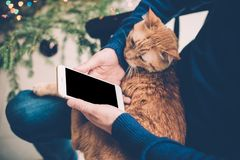 Young man relaxing at home with ginger cat and smartphone in his Stock Image