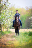 Young man riding a horse around the apple orchard Royalty Free Stock Photography