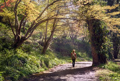 Young man with a rucksack going down by the beatiful forest pathway Stock Images