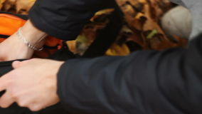 A young man rummages in a bag. On the background of yellow leaves stock video