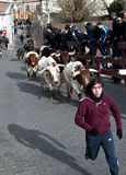 Young man running with the bulls in Valdemorillo Stock Photo