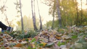 Young man in running shoes runs on fallen autumn leaves through the sun in the forest in slow motion. 1920x1080 stock video