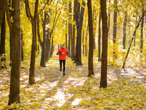 Young Man Running on Sunny Trail in the Beautiful Autumn Oak Forest Royalty Free Stock Images
