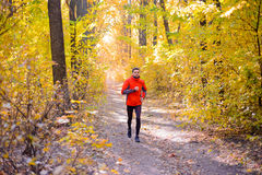 Young Man Running on Sunny Trail in the Beautiful Autumn Oak Forest Stock Image