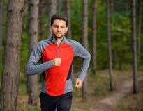 Young Man Running on the Trail in the Wild Pine Forest. Active Lifestyle Royalty Free Stock Images
