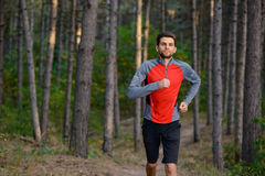 Young Man Running on the Trail in the Wild Pine Forest. Active Lifestyle Stock Image