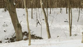 Young man running in the winter forest stock footage