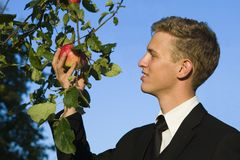 Young man sampling apple. The young owner of an apple orchad tesing his red-golden apples just before harvest stock images