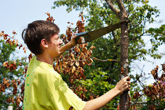 Young man sawing dry wood royalty free stock images
