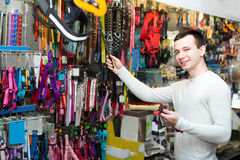 Young man selecting collars and leads Stock Images