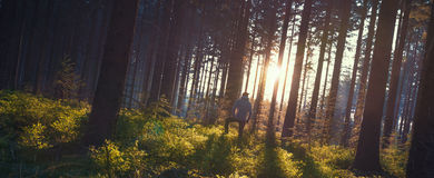 Young man in silent forrest with sunlight Royalty Free Stock Images