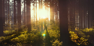 Young man in silent forrest with sunlight Royalty Free Stock Photo