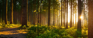 Young man in silent forrest with sunlight Stock Photo