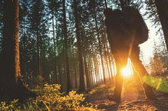 Young man in silent forrest with sunlight Royalty Free Stock Photos
