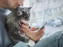 Young man sits on the windowsill, holds a beautiful, fluffy kitten on his lap. And reads news on his mobile phone royalty free stock photography