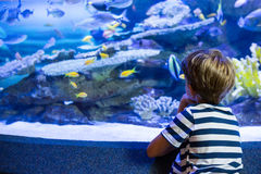 Young man sitting in front of a fish-tank Stock Images