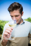 Young man smelling wine in glass at vineyard Stock Photography