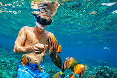 Young man snorkeling with coral reef fishes. Happy family vacation - man in snorkeling mask dive underwater with tropical fishes in coral reef sea pool. Travel Royalty Free Stock Image