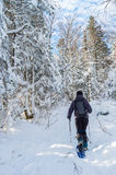 Young man snowshoeing in winter, in the Quebec eastern township stock image