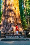 Young man standing by the huge sequoia tree in the Sequoia National Park. Tiny human comparing to an enormous tree royalty free stock images