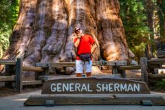 Young man standing by the huge sequoia tree in the Sequoia National Park. Tiny human comparing to an enormous tree royalty free stock photography