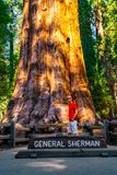 Young man standing by the huge sequoia tree in the Sequoia National Park. Tiny human comparing to an enormous tree stock image