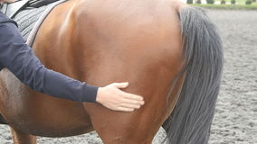 Young man stroking body of brown horse outdoors. Arm of male jockey caresses and petting chestnut stallion at nature stock footage