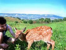 Young man stroking a sad little deer on nature. stock photo