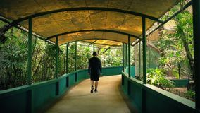 Tourist Walks Under Canopy In Zoo. Young man in summer clothes walks on path surrounded by tropical plants stock footage