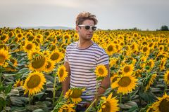 Young man in sunflower field Stock Images