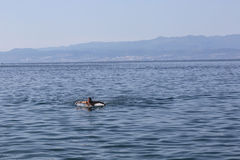 Young man swimming in Adriatic sea Royalty Free Stock Image
