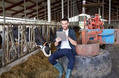 Young man with tablet pc and cows on dairy farm Royalty Free Stock Photos