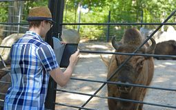 Young man takes pictures on bison Bison bonasus.  royalty free stock photos