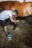 Young man taking care of his horse in stable. Young man taking good care on horse in stable royalty free stock images
