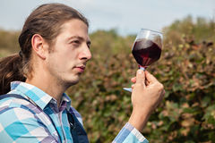 Young Man Tasting Wine Stock Image