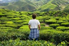 Young Man on Tea Plantation Royalty Free Stock Photo